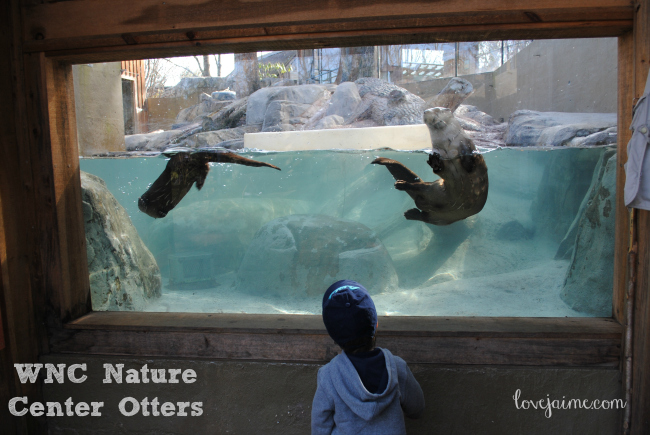 Day trip to the WNC Nature Center. #WNCNatureCenter #Asheville #NC